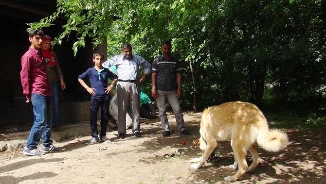 Bismil'de Sebzeyle beslenen köpek görenleri hayrete düşürdü 1