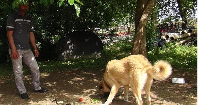 Bismil'de Sebzeyle beslenen köpek görenleri hayrete düşürdü 2