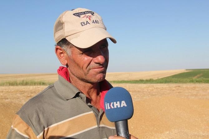 Bismil'de Buğday Hasadı Başladı 3
