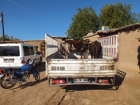 Bismil Vefa_Der, Bismil'de 500 aileye kurban eti dağıttı