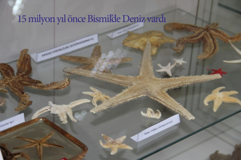 15 milyon yıl önce Bismil'de Deniz vardı