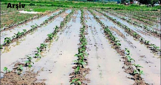 Bismil'de Yağmur Pamuk Tarlalarına Zarar Verdi