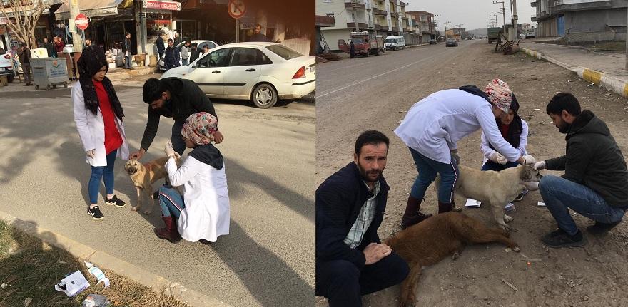 Bismil Belediyesinden Sokak Hayvanları İçin Sıcak Yuva