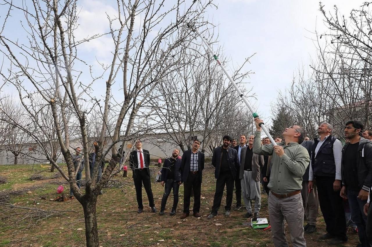 Meyve ağaçlarında budama uygulamalı olarak gösterildi