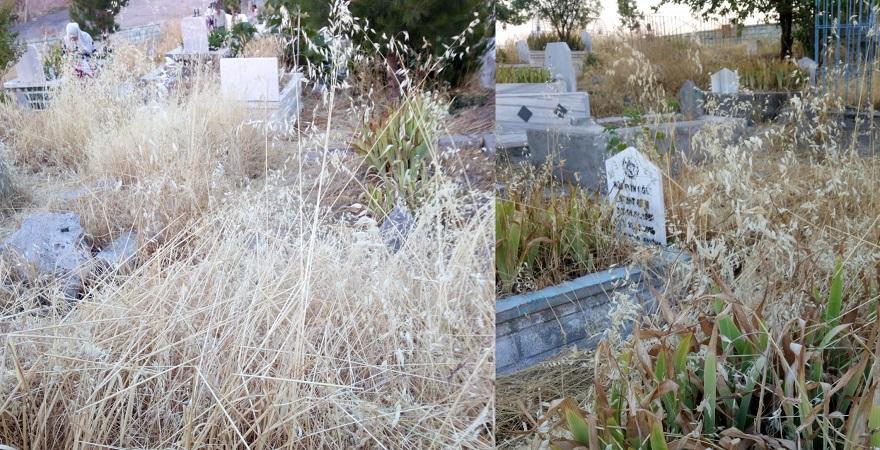Bismil Toki mezarlığı otlardan geçilmiyor