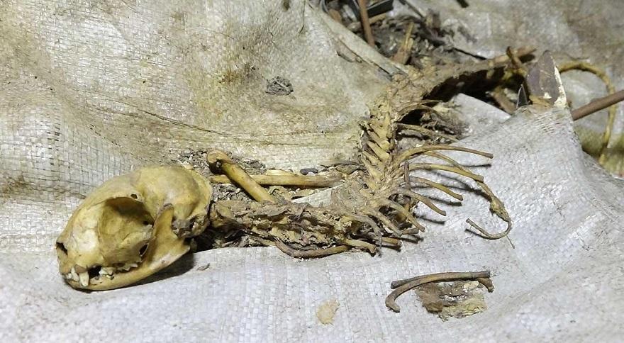Tarihi Sur'da esrarengiz hayvan iskeleti bulundu