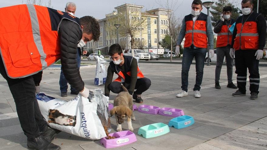 Parklar Sokak Hayvanlarına Tahsis Edildi