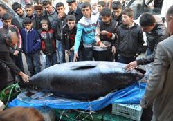 585 Kiloluk Balık Vatandaşın İlgi Odağı Oldu