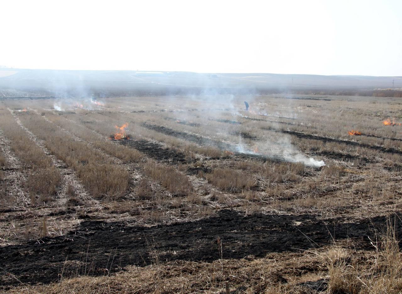 Diyarbakır'da anız yangınlarının önlenmesi için genelge