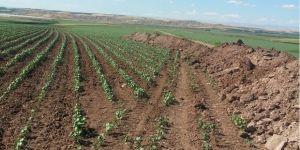 Bismil Ovası'nda Çiftçiler DSİ'ye Tepkili