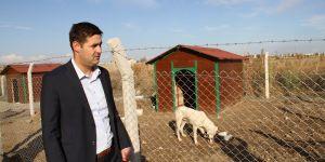 """Bismil'de """"Şefkat Köpek Toplama Merkezi"""" Açıldı"""