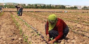 70 aileye  450 dönümlük arazi tahsis edildi.