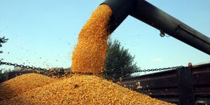 Çiftçiler mısır hasadından memnun