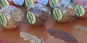 37 çiftçiye 51 ton ücretsiz tohum dağıtıldı