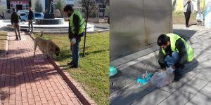Bismil Belediyesi'nden Sokak Hayvanlarına Yiyecek Dağıtımı