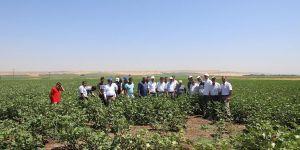 Diyarbakır Tarım ve Orman İl Müdürlüğünden çiftçilere ziyaret