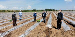 Bismil'de çiftçiye yasak yok, üretime devam!