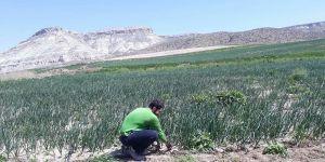 Bir öğretmen adayının mücadelesi: Gündüz tarla, akşam KPSS