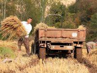 Tarım destekleri yüzde 20 arttı