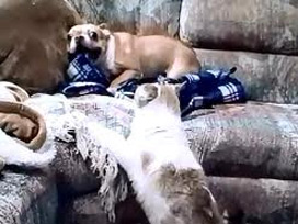 İşte dünyanın en korkak köpeği!
