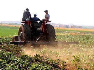 'Çiftçinin pamuktan kaçması, devletin yanlış politikasının sonucudur'
